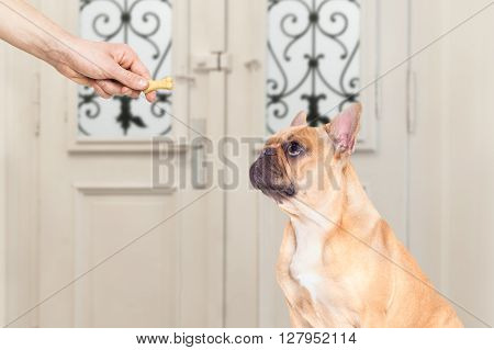 Owner With A Treat For Dog