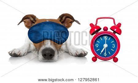 Sleepyhead Dog