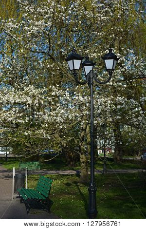 Streetlight and green bench in the spring park with white blossoming magnolia tree