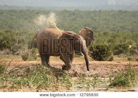 Hot African Elephant