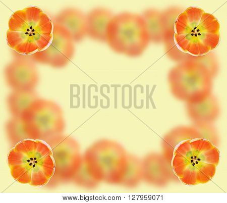 Beautiful abstract orange frame collage background with tulips macro
