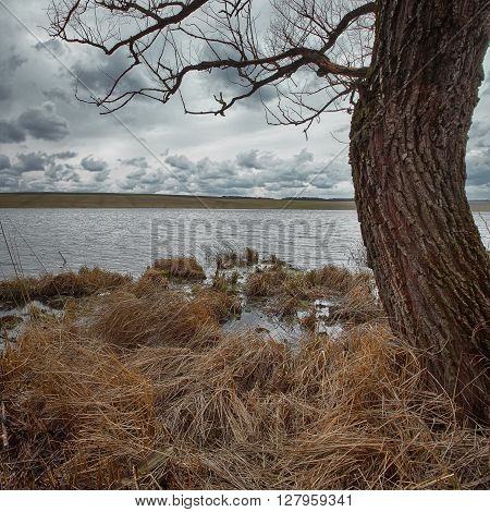 Cloudy weather over the lake. Dry reed at foreground