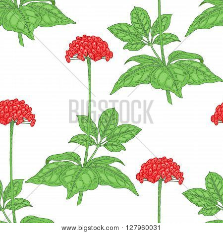 Illustration of ginseng. Seamless vector pattern. Berries of medicinal plants on a white background.
