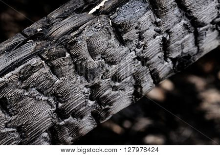 Close up of burnt log after fire