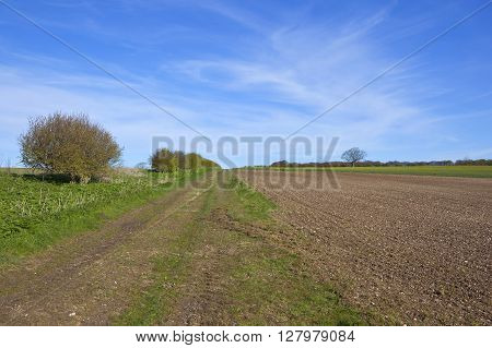 cultivated fields and hawthorn hedgerows by a farm track on the yorkshire wolds in springtime