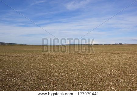 chalky plowed soil on the yorkshire wolds england in springtime under a blue sky with wispy white clouds