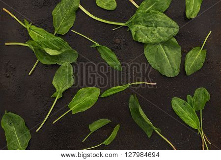 fresh sorrel leaves scattered on a dark metallic background. blackout photo
