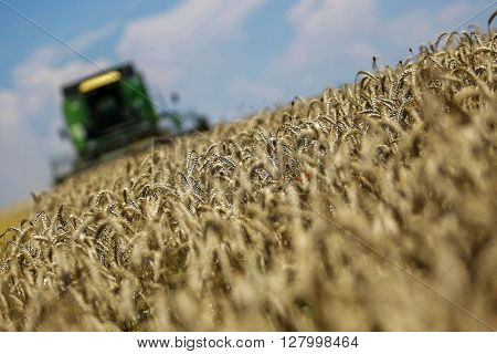 Working Harvesting Combine In The Field Of Wheat With Selective Focus