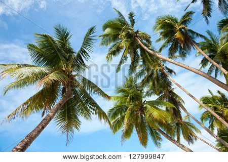 Coconut palm trees on the tropical beach. Perspective view, under blue sky. Paradise scene. Boracay, Philippines