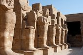 picture of skarabaeus  - ancient karnak temple in luxor in egypt - JPG