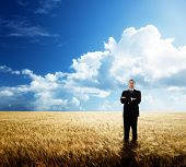 young businessman on yellow wheat field