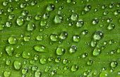 stock photo of extreme close-up  - Close up of the green Leaf covered dew - JPG