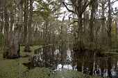 stock photo of swamps  - Swamp near New Orleans - JPG
