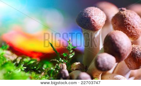 Group of mushrooms in moss with colorful vivid background