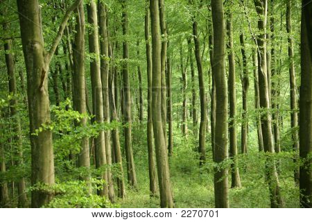 Green Fresh Forest Scene