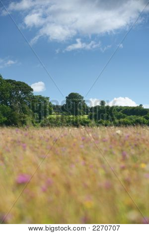 Country Wild Flower Meadow