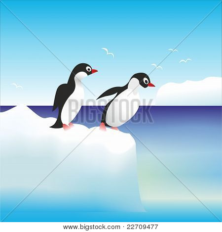 penguins on the rock