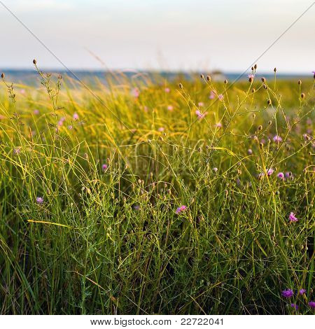 Dune Grass And Wildflowers
