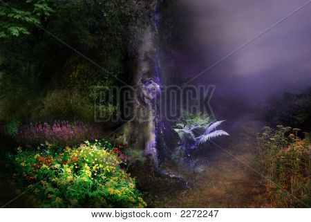 Fairy Forest Night