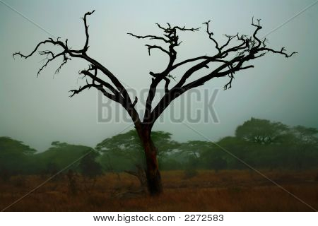 Misty Morning In Africa