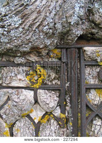 Einen alten Baum in eisernen Zaun gewachsen.