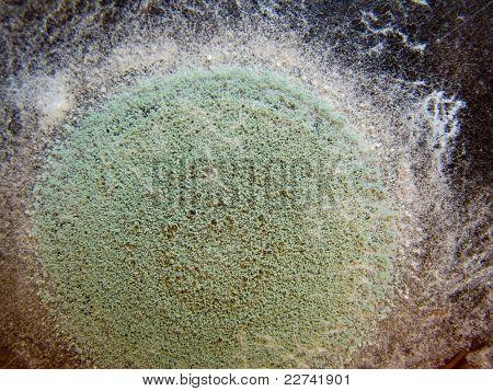 Imagem de close-up de um molde