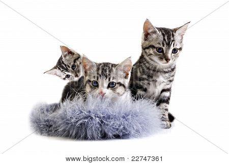 Adorable Little Kittens From The Same Litter