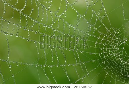 spin-web