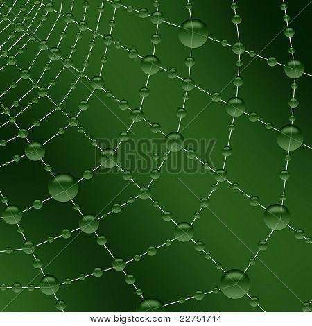 fresh morning dewdrops on the spiderweb
