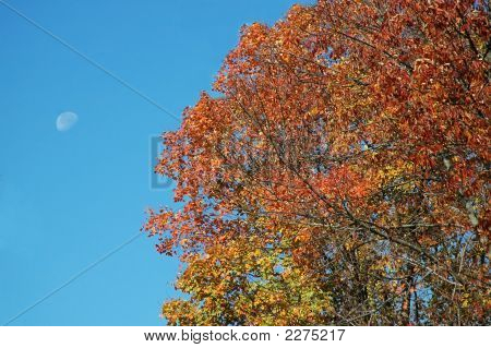 Fall Scene 6