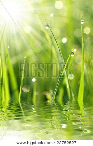 Frisches Gras mit dem Tau fällt schließen sich