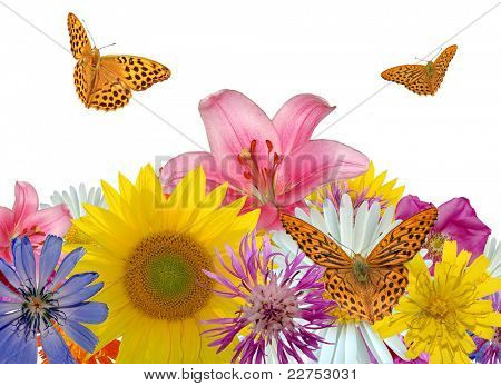 meadow flowers with butterflies