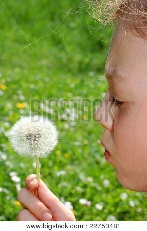 sweet little girl blowing dandelion on the meadow