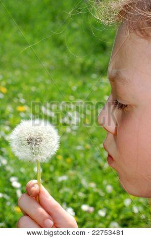 sweet little girl blowing dandelion on the meadow
