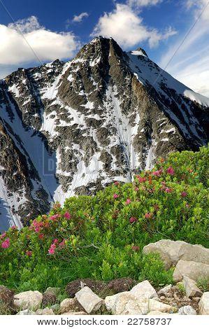 Presanella of Passo Tonale-Italian Alps