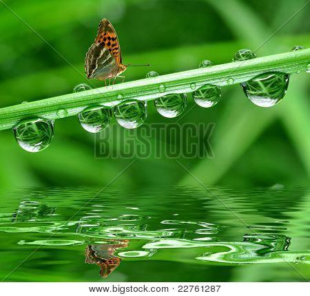 mariposa y Rocío fresco