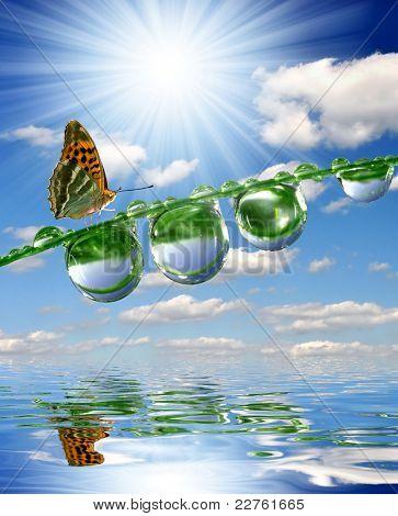 frische Morgentau und Schmetterling