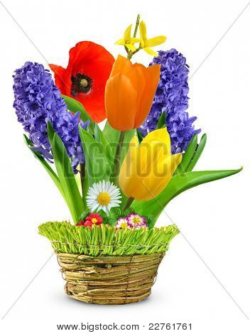 Spring flowers in a decorative pot