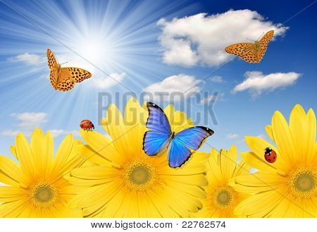 yellow gerberas with butterflies and ladybug