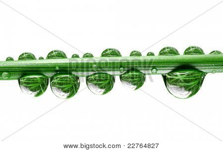 Fresh grass with dew drops close up isolated