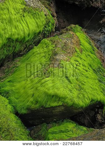 Moss formation on rocks