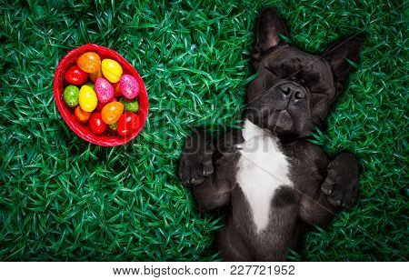 Funny Happy French Bulldog Easter