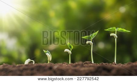 Concept Agriculture Planting Seeding Growing