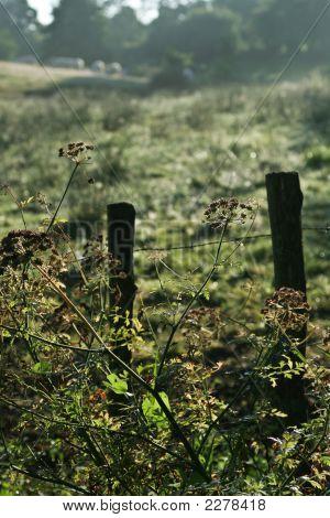 Fence Morning Field