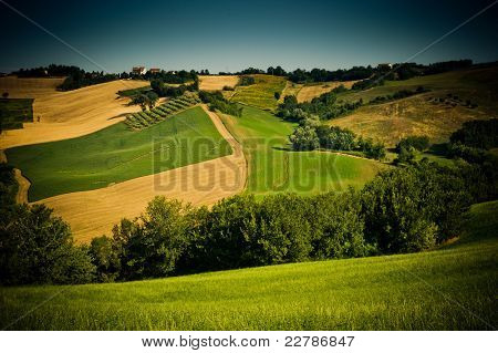 Lovely green lush countryside in the morning light