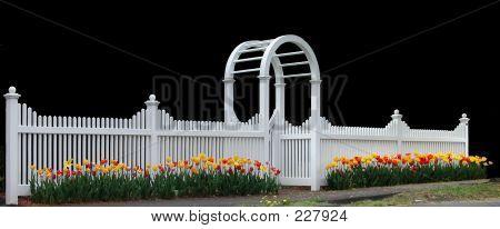 Fence Tulips 01