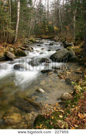 Stream im Wald