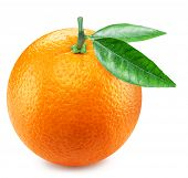 Ripe orange fruit with orange leaves. Clipping path. poster