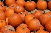 stock photo of jack-o-laterns-jack-o-latern  - A large harvest of pumpkins before Halloween - JPG