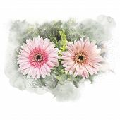 Illustration Of Blossom Gerbera Artistic Floral Abstract Background. Watercolor Painting (retouch). poster